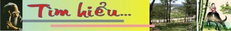 Logo tim hieu