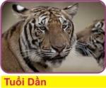 D3 Tuoi Dan