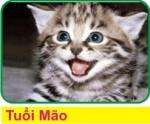 D4 Tuoi Mao