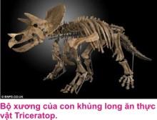 5 Khung long 1