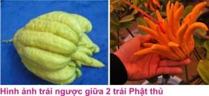 4 Phat thu 1