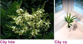 9 Cay canh 7