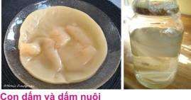 4 Nuoi dam