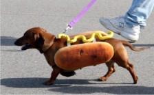 9 Hot dog 1