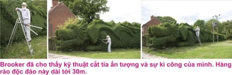 8 Hang rao