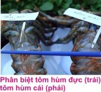 9 Tom hum 3