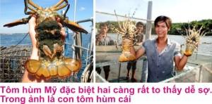 9 Tom hum 4