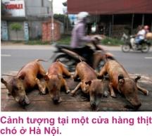 5 Thit cho 1