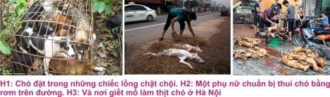 5 Thit cho 4