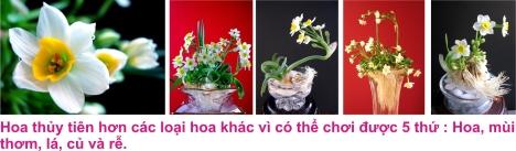 2 Hoa thuy tien 3