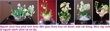 2 Hoa thuy tien 4