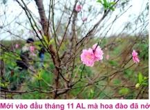 9 Dao Nhat tan 1