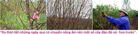 9 Dao Nhat tan 2