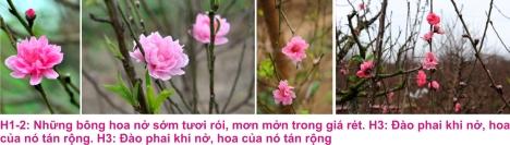 9 Dao Nhat tan 3